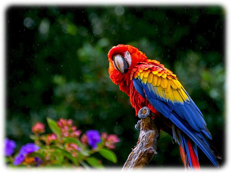 Krafttier Papagei