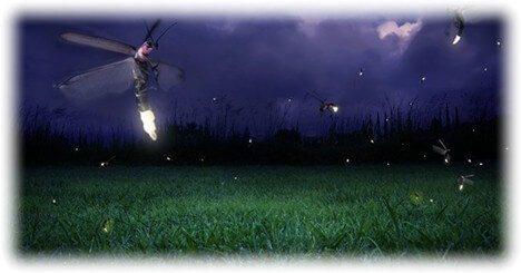 Krafttier Glühwürmchen